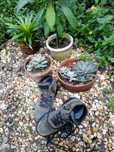 Rebooting (boots and plants)
