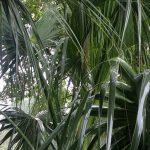 Rain on palm leaves