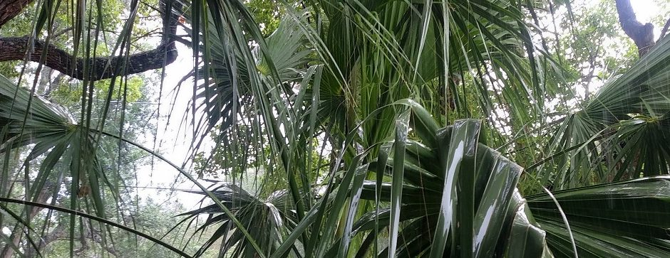 Rain on palm leaves